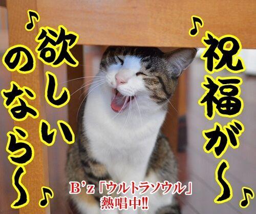ウルトラソウル 猫の写真で4コマ漫画 1コマ目ッ