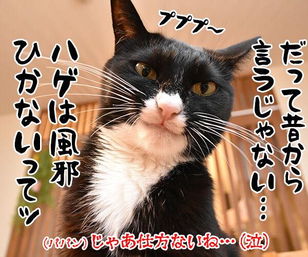 病院にいったけど 猫の写真で4コマ漫画 4コマ目ッ