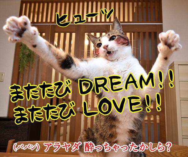 またたび LOVE 猫の写真で4コマ漫画 2コマ目ッ