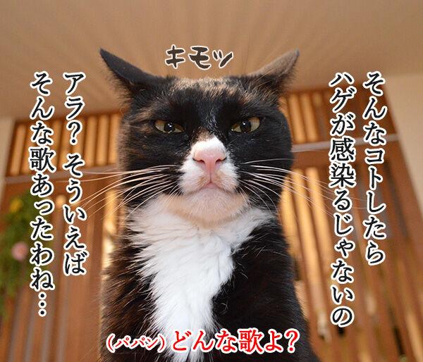 愛しくてハグしたいのよッ 猫の写真で4コマ漫画 2コマ目ッ