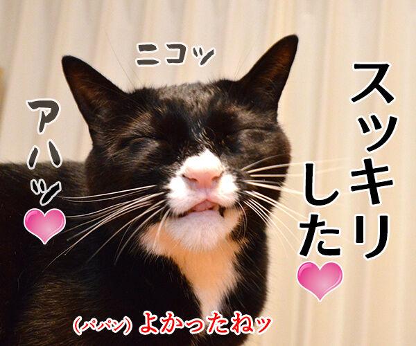 アタチ かゆいのッ 猫の写真で4コマ漫画 4コマ目ッ