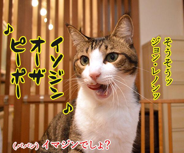 今日はジョン・レノンさんが亡くなられた日なんですってッ 猫の写真で4コマ漫画 2コマ目ッ
