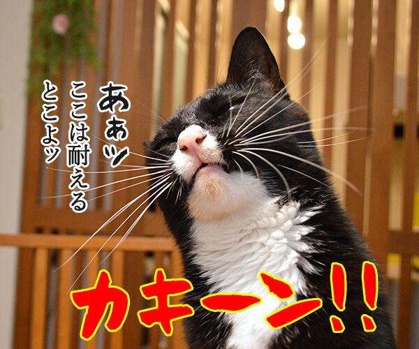熱闘甲子園で熱くなるのよッッ 猫の写真で4コマ漫画 2コマ目ッ