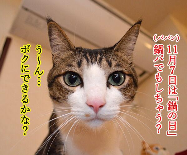 きょうは『鍋の日』なんですってッ 猫の写真で4コマ漫画 1コマ目ッ
