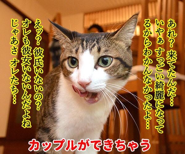 成人式あるある 猫の写真で4コマ漫画 3コマ目ッ