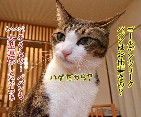 ゴールデンウィークはお仕事なの 猫の写真で4コマ漫画 1コマ目ッ