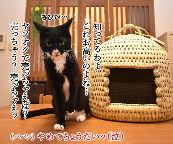 信州安曇野産の藁100%の『ねこつぐら』なのッ 猫の写真で4コマ漫画 2コマ目ッ