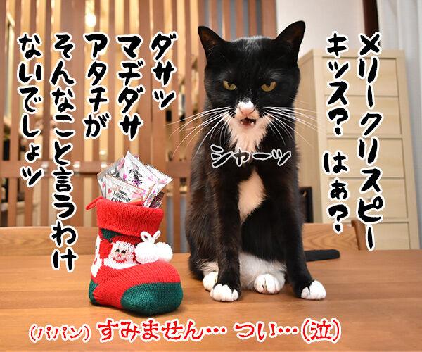 あずきさんとだいずさんにクリスマスプレゼントなのッ 猫の写真で4コマ漫画 4コマ目ッ