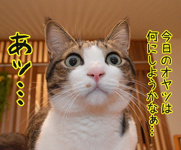 あッ… 猫の写真で4コマ漫画 1コマ目ッ