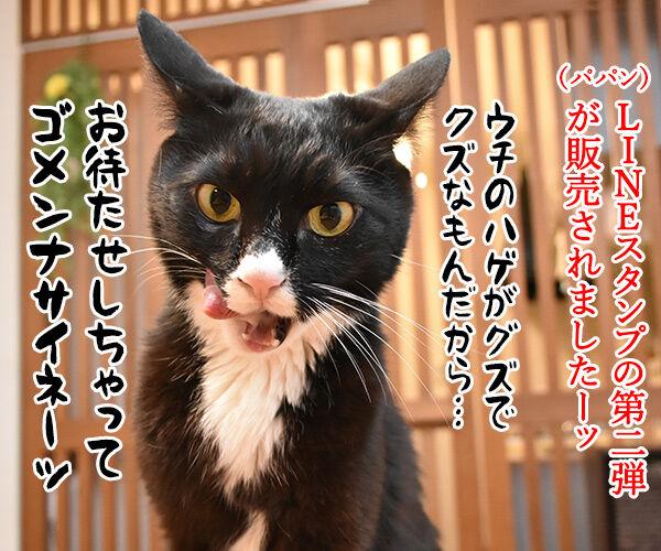 LINEスタンプの第二弾が販売されたのよッ 猫の写真で4コマ漫画 1コマ目ッ