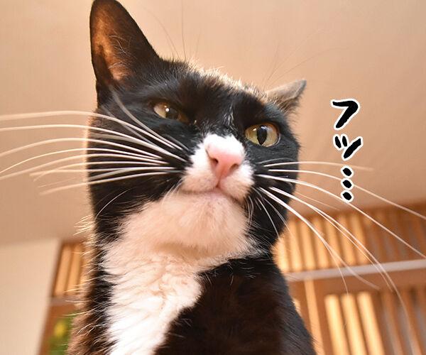 ちがいのわかるオンナ 猫の写真で4コマ漫画 3コマ目ッ