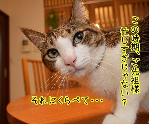 お盆 猫の写真で4コマ漫画 3コマ目ッ