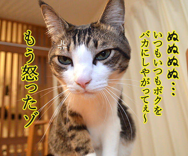 まったくあずきはドジでノロマな… 其の二 猫の写真で4コマ漫画 2コマ目ッ