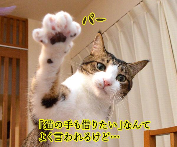 たい 猫 も の 手 借り 第78回 猫の手も借りたい