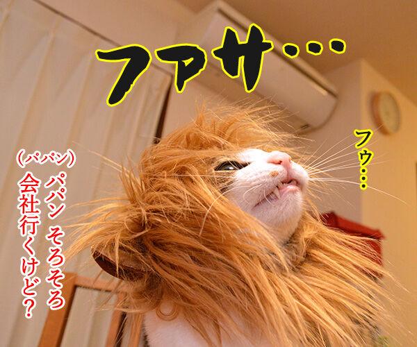 かまやつヘアーは 猫の写真で4コマ漫画 3コマ目ッ