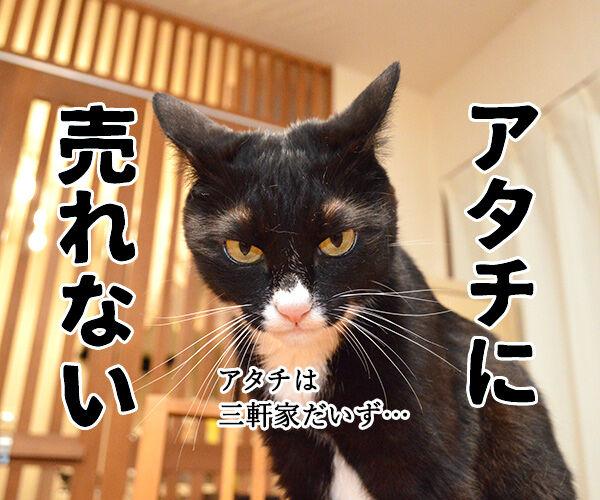 家売るオンナ 私に売れない家はないッ!! 猫の写真で4コマ漫画 2コマ目ッ