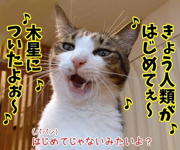 探査機ジュノーが木星到達なんですってッ 猫の写真で4コマ漫画 1コマ目ッ