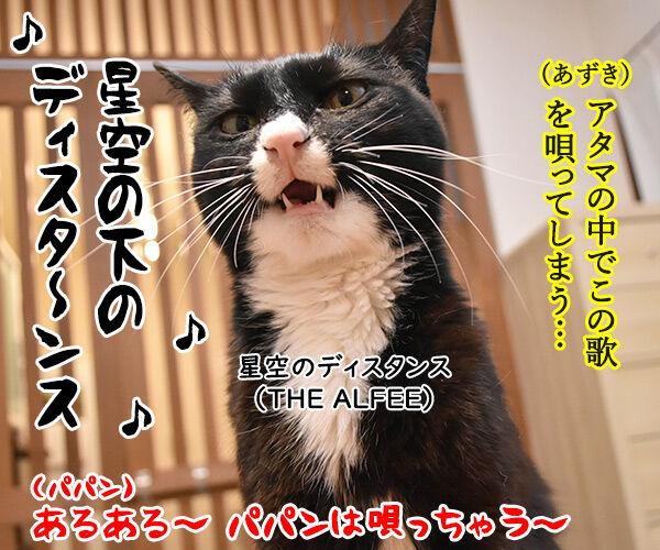 ソーシャルディスタンスのあるあるなのよッ 猫の写真で4コマ漫画 4コマ目ッ