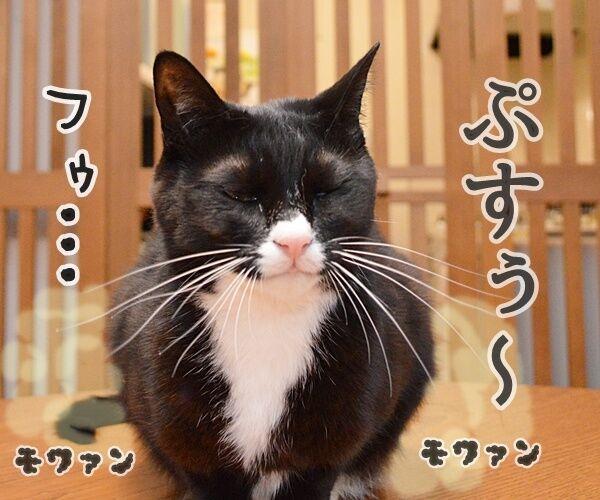 おなかがギュルッ 猫の写真で4コマ漫画 2コマ目ッ