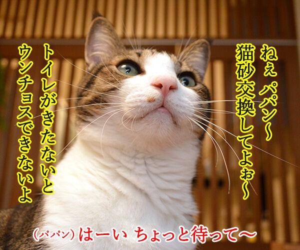 パパンてホントに…… 猫の写真で4コマ漫画 1コマ目ッ