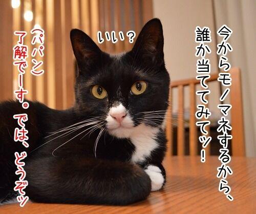 モノマネ当てクイズ 猫の写真で4コマ漫画 1コマ目ッ