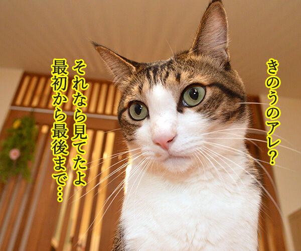 見ちゃったけどなにか? 猫の写真で4コマ漫画 2コマ目ッ