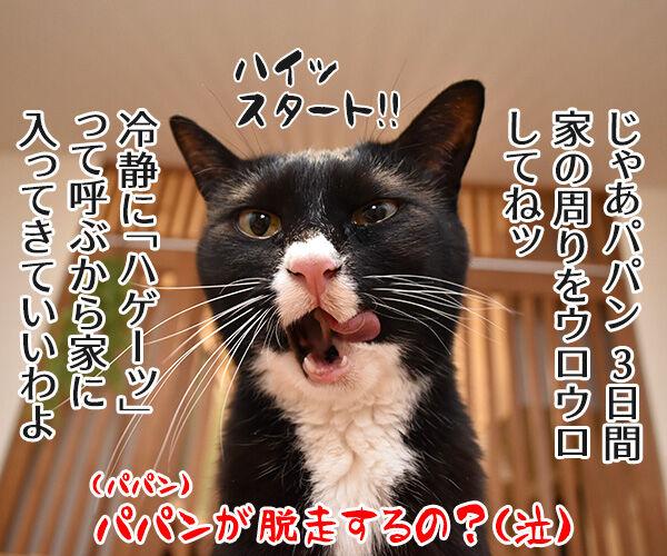 室内飼いの猫が脱走したらどうする? 猫の写真で4コマ漫画 4コマ目ッ