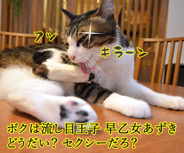 流し目王子 早乙女あずき 猫の写真で4コマ漫画 1コマ目ッ