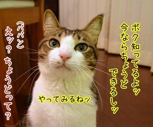 ♪ラッスンゴレライ♪ 猫の写真で4コマ漫画 3コマ目ッ