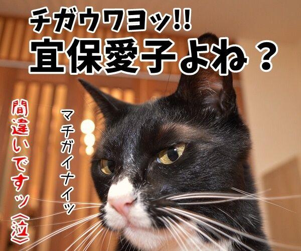 愛ちゃんが入籍してたんですってッ 猫の写真で4コマ漫画 4コマ目ッ