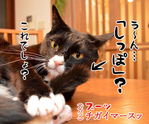きょうは何の記念日でしょうか? 猫の写真で4コマ漫画 3コマ目ッ