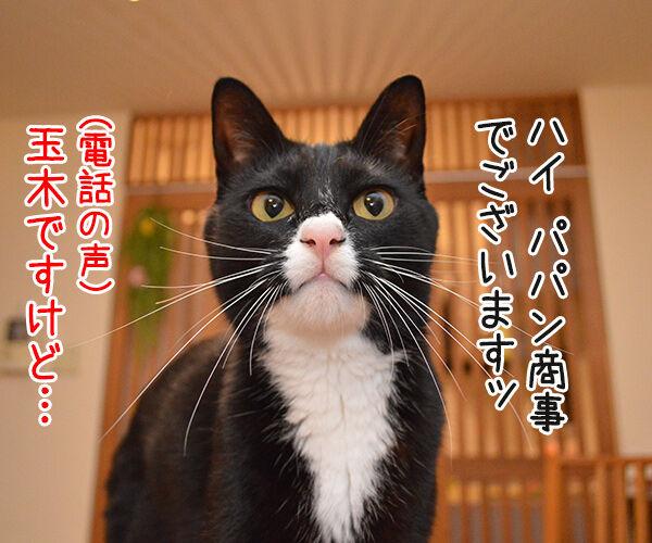 OLだいず 猫の写真で4コマ漫画 3コマ目ッ