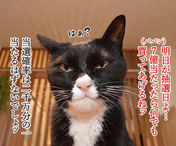 年末ジャンボは明日が抽選日なのッ 猫の写真で4コマ漫画 1コマ目ッ