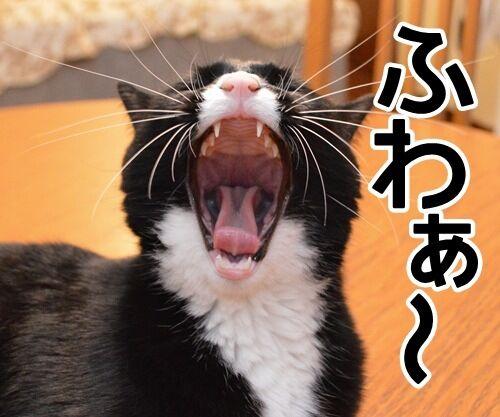 見届けなくちゃ 猫の写真で4コマ漫画 2コマ目ッ