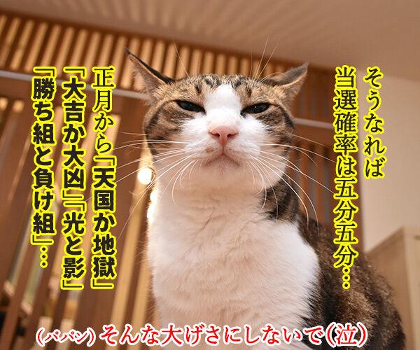 年賀状プレゼント ご応募アリガトゴザマシターッ 猫の写真で4コマ漫画 2コマ目ッ