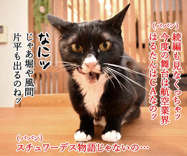 おっさんずラブのDVDをイッキ見しちゃったのよッ 猫の写真で4コマ漫画 2コマ目ッ