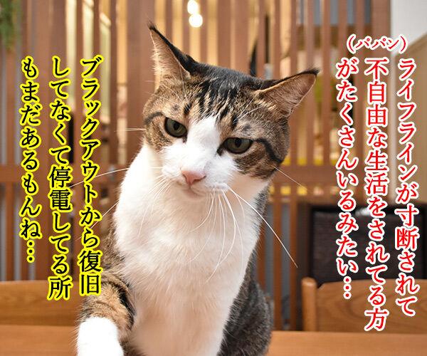 北海道胆振東部地震 心よりお見舞い申し上げます 猫の写真で4コマ漫画 2コマ目ッ
