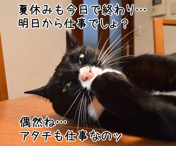 明日からお仕事 猫の写真で4コマ漫画 1コマ目ッ