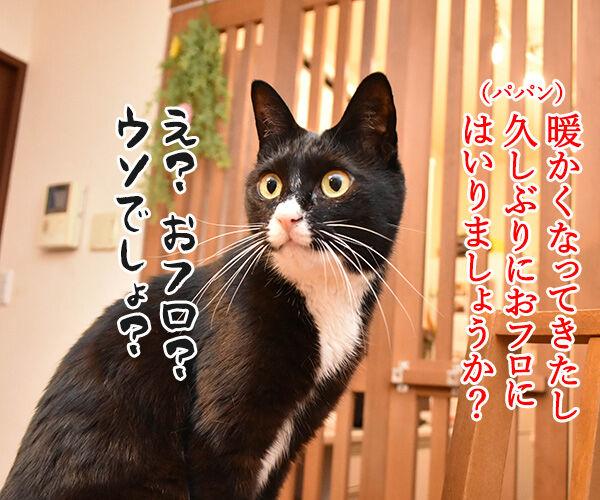 ひさしぶりにおフロに入りましょうか? 猫の写真で4コマ漫画 1コマ目ッ