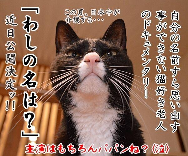 映画『君の名は。』の興行収入が62億円突破なんですってッ 猫の写真で4コマ漫画 4コマ目ッ