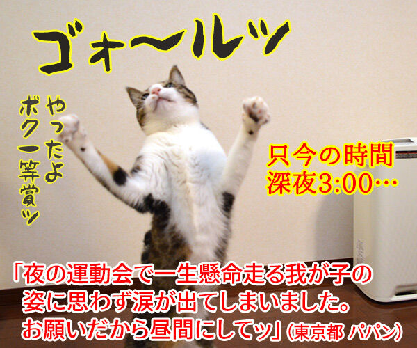 運動会で走る我が子 猫の写真で4コマ漫画 4コマ目ッ