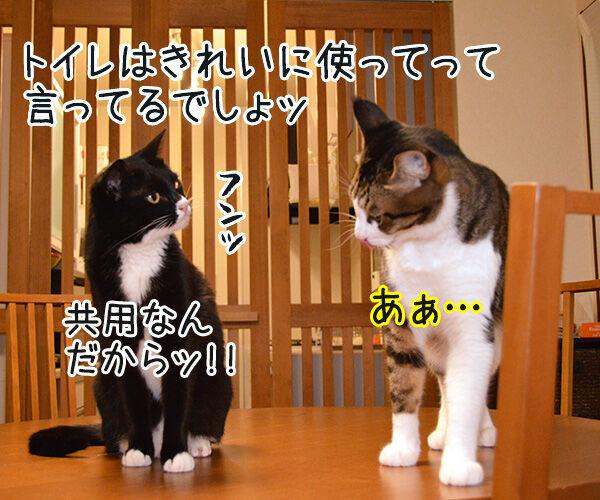 うぅ~ん… 猫の写真で4コマ漫画 1コマ目ッ