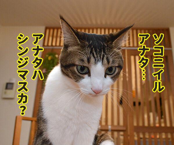アナタハシンジマスカ? 猫の写真で4コマ漫画 3コマ目ッ