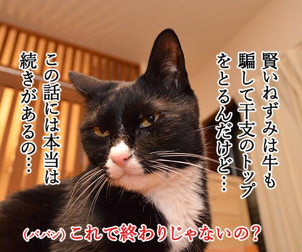 干支に猫がいないワケ 猫の写真で4コマ漫画 3コマ目ッ