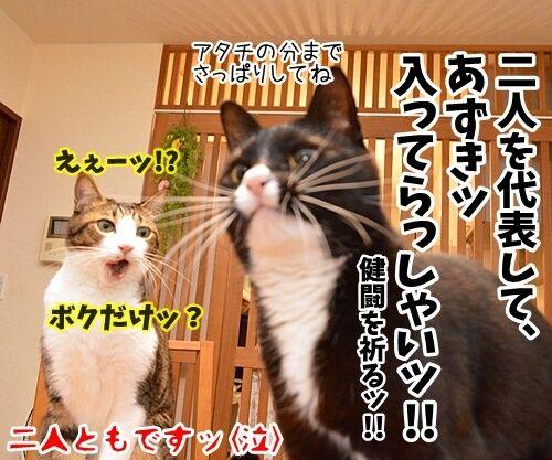今年の汚れ、今年のうちに 猫の写真で4コマ漫画 4コマ目ッ