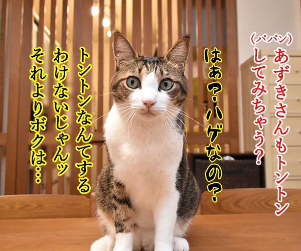 ネコトントンしてみちゃうー? 猫の写真で4コマ漫画 2コマ目ッ