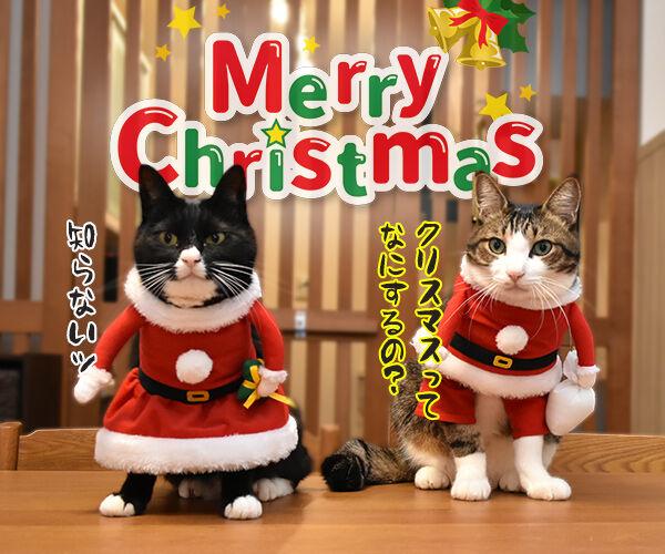 サンタガールとサンタボーイがプレゼントをお届けするわよッ 猫の写真で4コマ漫画 5コマ目ッ