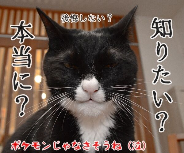 猫さんにはポケモンが見えるんですってッ 猫の写真で4コマ漫画 4コマ目ッ