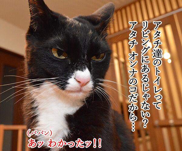 トイレのコトで話があるの 猫の写真で4コマ漫画 2コマ目ッ