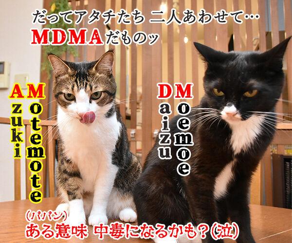沢尻エリカがMDMA所持で逮捕されちゃったのよッ 猫の写真で4コマ漫画 4コマ目ッ